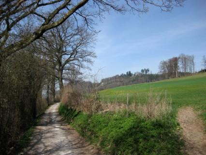Heckenweg zum Ferenberg