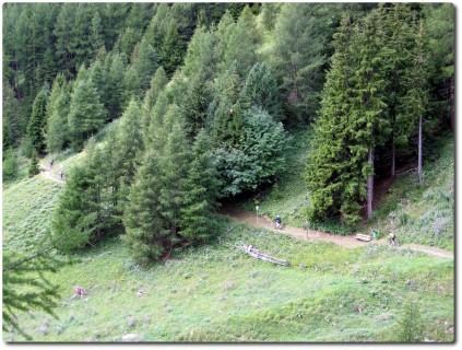 Flowtrails durch die Wälder von St. Moritz