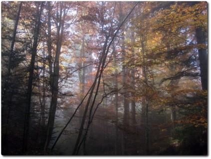 Herbststimmung 4