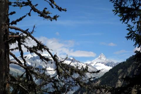 Ausblick auf das Finsteraarhorn