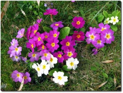 Noch mehr Blumen im Garten
