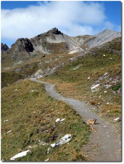 Trail hoch zum Btta di Forcola mit Murmelisperre