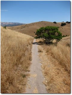 Fort Ord - Singletrails