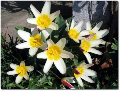 Frühlingsblumen überall