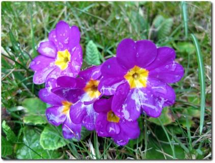 Feuchte Frühlingsblumen Ende Februar