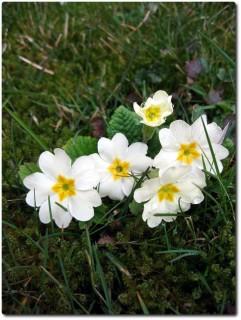Frühlingsblumen Ende Februar