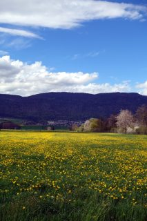 Blumenmeer und Jura