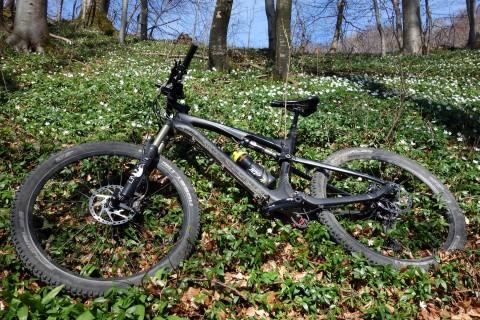 G710 im Frühlingswald