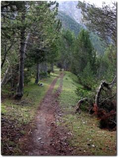 Abfahrt auf Serpentinen durch lichte Arvenwälder von der Alpe del Gallo zum Stausee