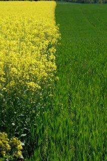 Gelb versus Grün