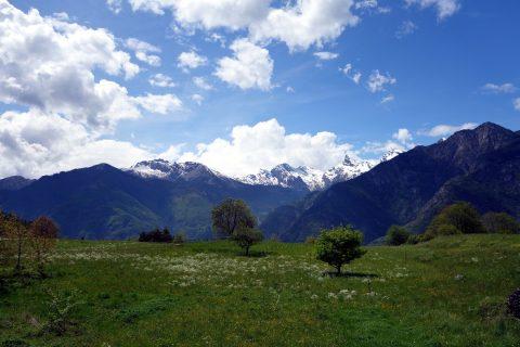 Frühlingswiese ob Grandhoelw