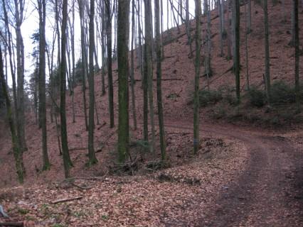 Fahrt um den Grauholz
