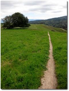 Fort Ord - Grüner Trail