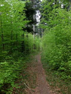 Grüne Trails 1