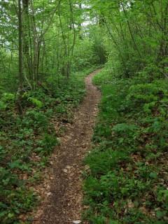 Grüne Trails 3
