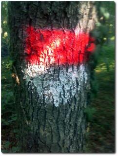 Grenzbaum oder Baumgrenze !?