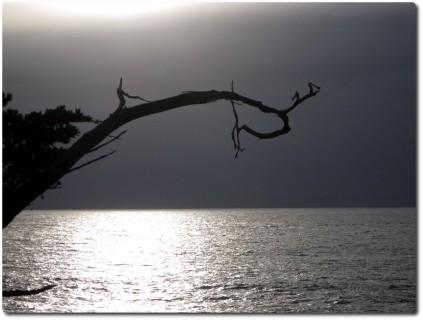 Ghost Tree - Abendstimmung vor Regenfront 01