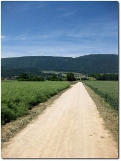 Die Kantonsgrenze in direkter Verlängerung den Jura hinauf...