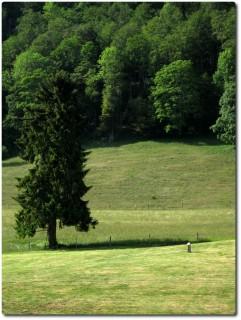 Einsamer Grenzstein auf einer Jurawiese