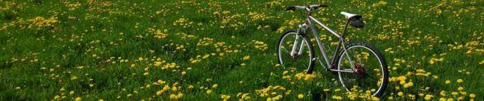 Ti29-40 im Blumenmeer