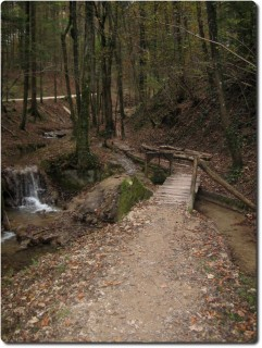 Trail im Heimlisbergwald