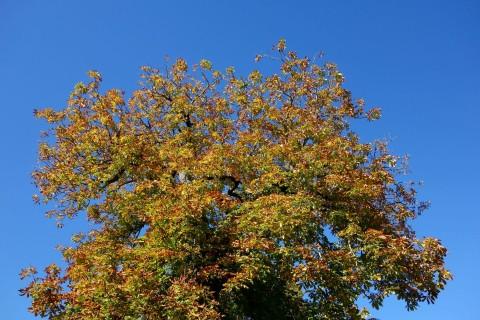 Der Herbst 14 fühlt sich wie der Sommer an
