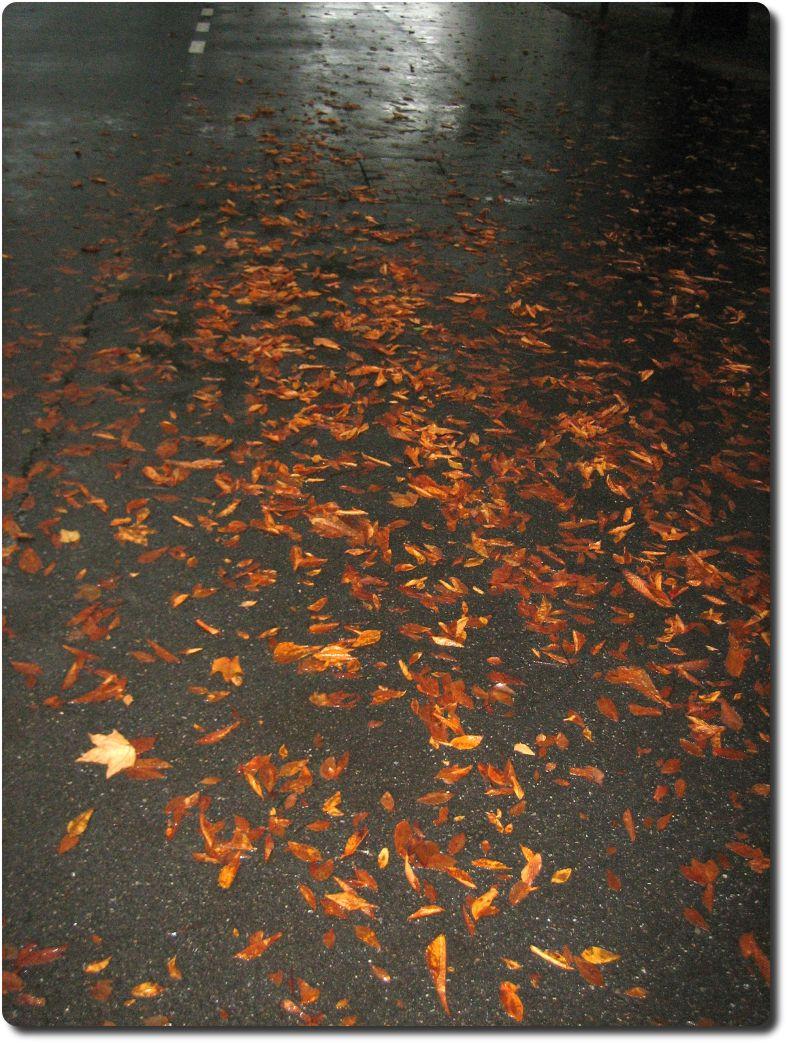 Herbstlaub Ende August