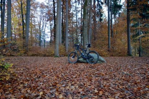 Solothurntrails - Herbstwald mit Bike