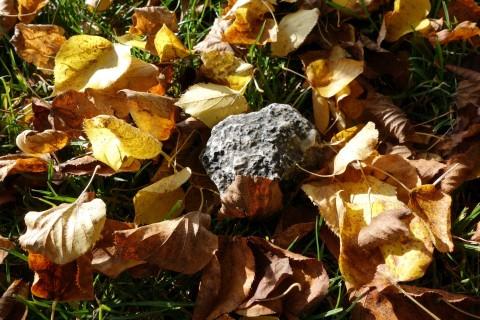 Geocache im Herbstlaub