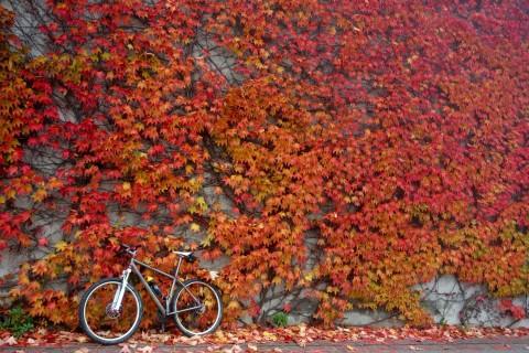 Ti29-40 vor Herbstwand