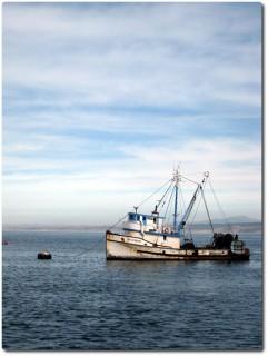 Fischerboot im Hafen von Monterey