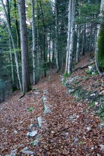 Höch Flue Trails