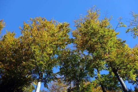 Goldener Herbst 13