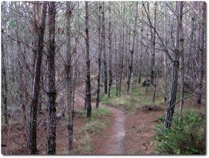 Huckleberry Hill - Schöner nackter Winterwald
