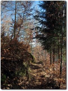 Färnstuhöchi Trail erster Abschnitt