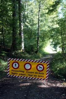 No way - Holzfäller