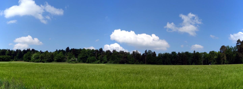 Wiesenstimmung beim Holzenberg