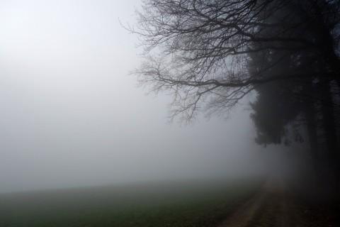 Nebel bei Lommiswil