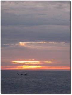 Killerwal und Sonnenuntergang 01