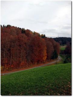 Herbstlicher Wald...