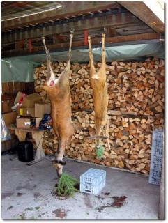 Bündner Jagd - erste Opfer