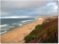 Herbst am Monterey Bay Coastal Trail