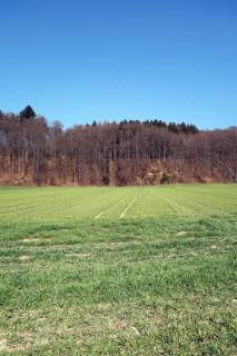 Grüne Wiesen bei Burgdorf