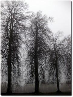 Traurige Nebelsicht auf dem Sonneberg