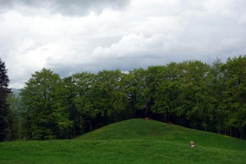 Grün - Kühe und Grenzsteine
