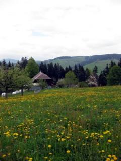 Blumen und Höfe am Wegesrand