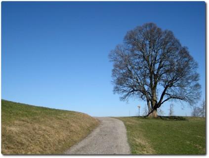 Baum oberhalb des Lehnhofs