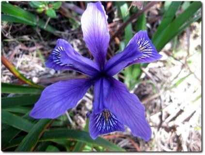 Blumen Point Lobos