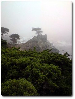 Lonely Cypress in Pebble Beach