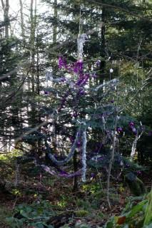 Waldweihnachtsbaum